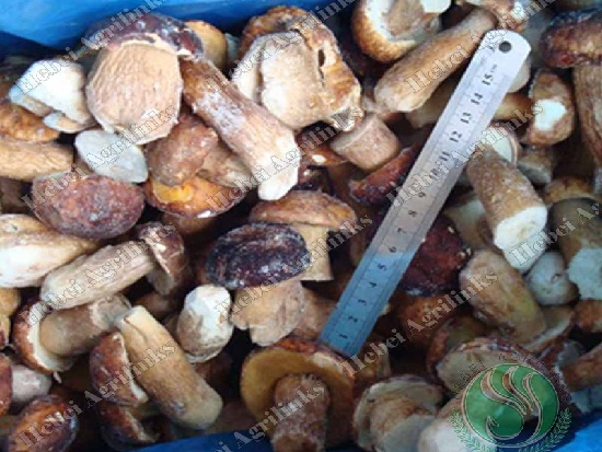 Different Types of Delicious Mushrooms and Their Benefits